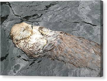 Sea Otter Canvas Print by Brian Chase