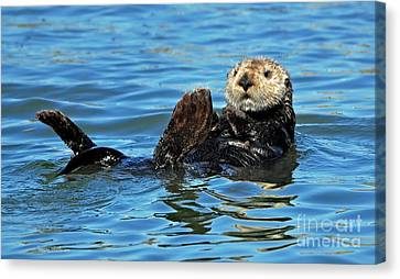 Canvas Print featuring the photograph Sea Otter Primping by Susan Wiedmann