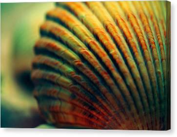 Sea Shell Art 1 Canvas Print