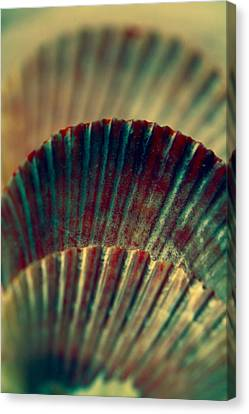 Sea Shell Art 2 Canvas Print by Bonnie Bruno