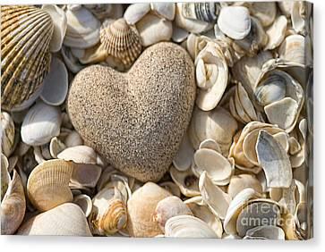 sea shell Heart Canvas Print by Boon Mee