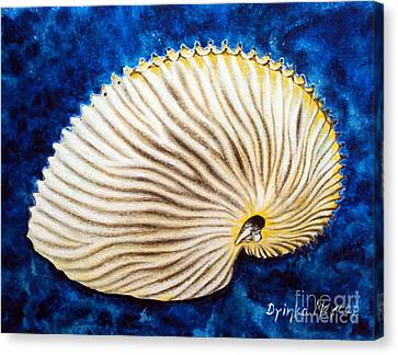 Sea Shell Original Oil On Canvas No.2. Canvas Print by Drinka Mercep