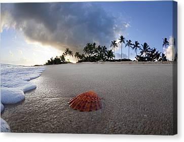 Sea Shell Sunrise Canvas Print