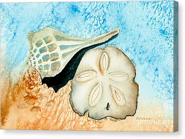 Sea Shell Treasures From The Ocean  Canvas Print