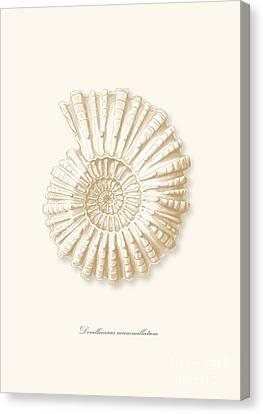 Sea Shell White French Vintage Canvas Print