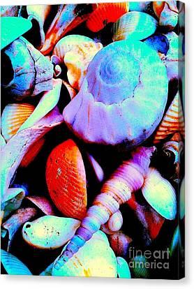 Sea Shells 5836 3 Canvas Print by Nina Kaye