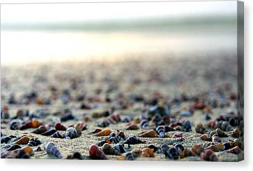 Sea Shells By The Sea Shore Canvas Print by Kaleidoscopik Photography