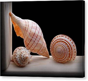 Canvas Print featuring the photograph Sea Shells by Krasimir Tolev