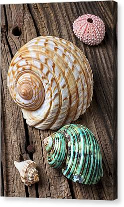 Nature Study Canvas Print - Sea Shells With Urchin  by Garry Gay