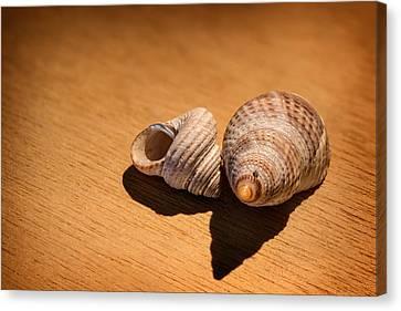 Sea Shells_3 Canvas Print by Joe Hudspeth
