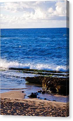 Sea Shelves Canvas Print by Christi Kraft