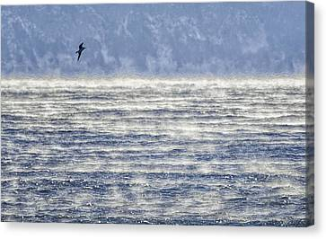 Sea Smoke And Gull Blues Canvas Print by Marty Saccone