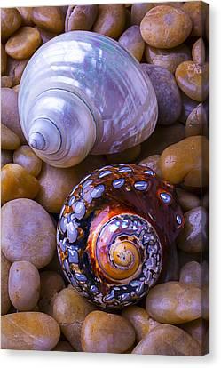 Seashell Fine Art Canvas Print - Sea Snail Shells by Garry Gay