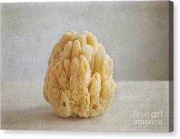 Canvas Print featuring the photograph Sea Sponge by Aiolos Greek Collections