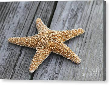 Sea Star On Deck Canvas Print