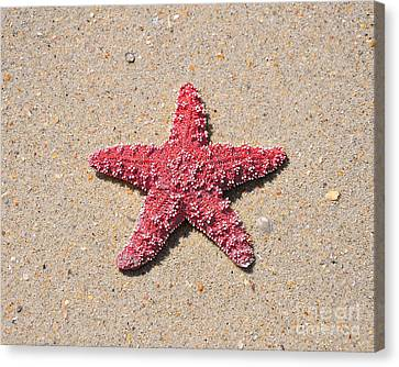 Sea Star - Red Canvas Print by Al Powell Photography USA