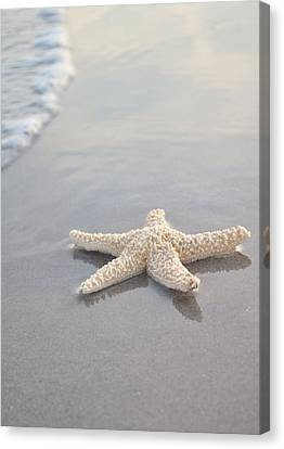 Calming Canvas Print - Sea Star by Samantha Leonetti