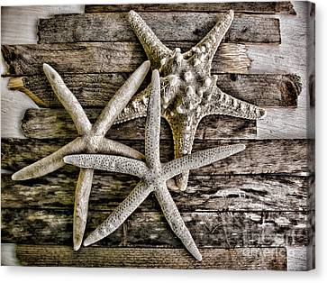 Sea Stars Canvas Print