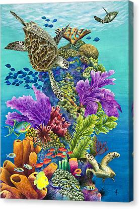 Sea Summit Canvas Print by Carolyn Steele