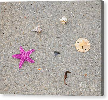 Sea Swag - Pink Canvas Print by Al Powell Photography USA