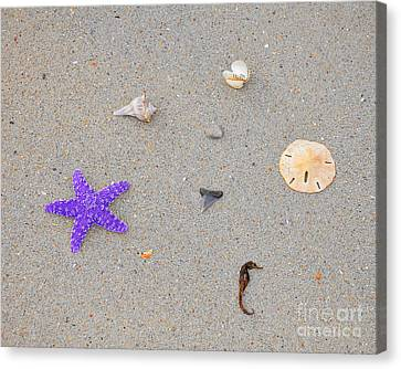 Sea Swag - Purple Canvas Print by Al Powell Photography USA