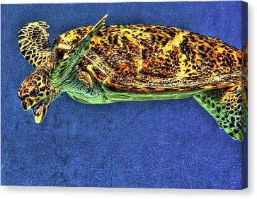 Sea Turtel Canvas Print by Karen Walzer