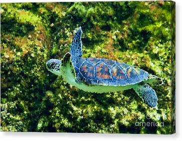 Sea Turtle Swimming In Water Canvas Print by Dan Friend