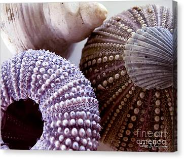 Sea Urchins  Canvas Print