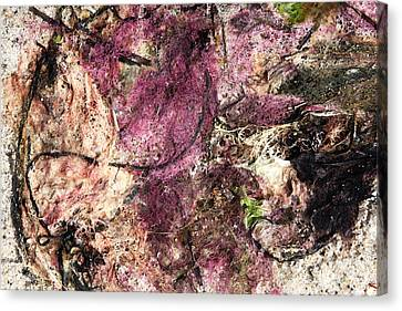 Canvas Print featuring the photograph Sea Weed by Brooke T Ryan