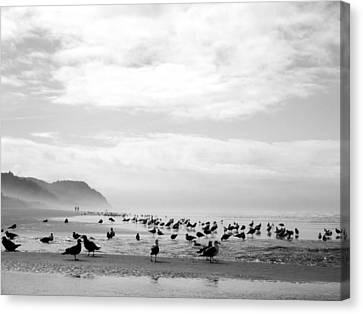 Seabird Horizon Canvas Print