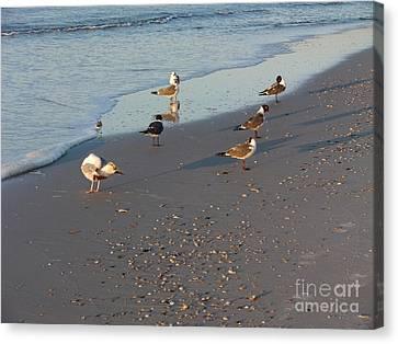 Seabirds Canvas Print by Deborah DeLaBarre