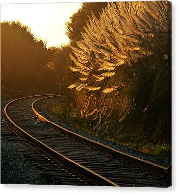 Seacliff Tracks At Sunset Canvas Print by Amelia Racca
