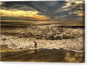 Canvas Print featuring the photograph Seagull Sunset Bath by Julis Simo