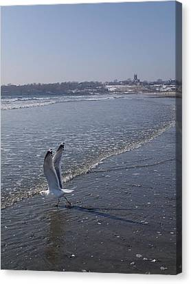 Canvas Print featuring the photograph Seagull 1 by Robert Nickologianis