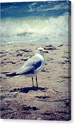 Seagull 1 Series 2 Canvas Print by Kelly Nowak