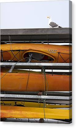 Seagull And Kayaks At A T And T Park San Francisco Canvas Print by Studio Janney