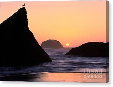 Seagull And Sunset Canvas Print by Inge Johnsson