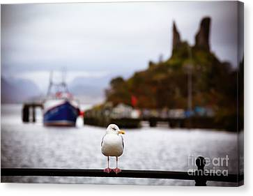 Harbour Canvas Print - Seagull At Moil Castle by Jane Rix