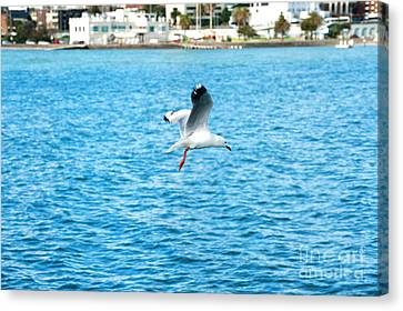 Canvas Print featuring the photograph Seagull At St Kilda by Yew Kwang