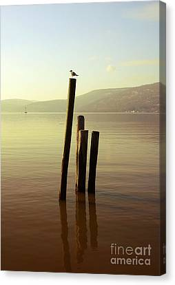 Canvas Print featuring the photograph Seagull At Sunset by Rafael Quirindongo