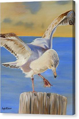 Seagull Ballet Canvas Print by Phyllis Beiser