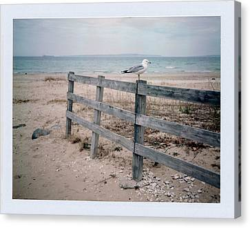Seagull Canvas Print by Brady D Hebert