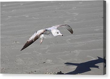 Canvas Print featuring the pyrography Seagull by Chris Thomas