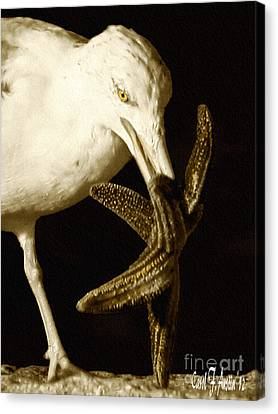 Seagull Dancing With A Star Canvas Print