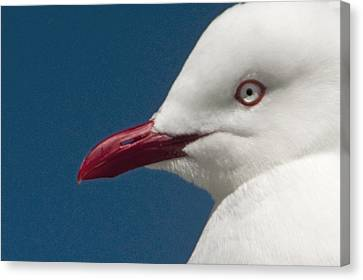 Canvas Print featuring the photograph Seagull by Dennis Cox WorldViews