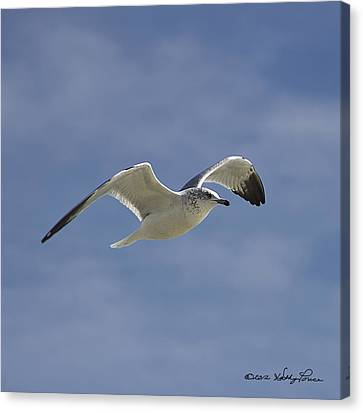 Canvas Print featuring the photograph Seagull Flight I by Kathy Ponce