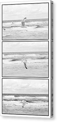 Seagull Flying  Canvas Print