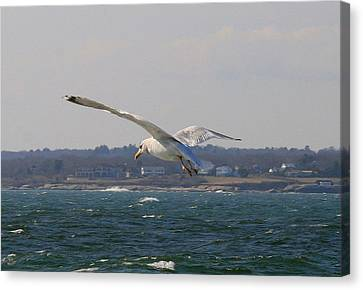 Seagull Canvas Print - Seagull Ocean Flight  by Neal Eslinger