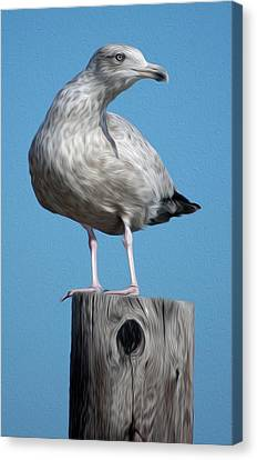 Canvas Print featuring the digital art Seagull by Kelvin Booker