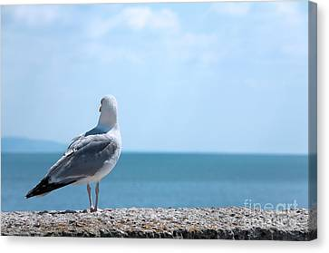 Seagull Looking Out To Sea Canvas Print by Natalie Kinnear